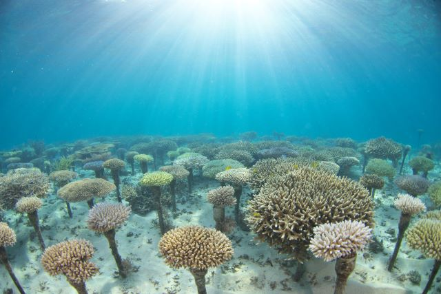 ANA万座サンゴ