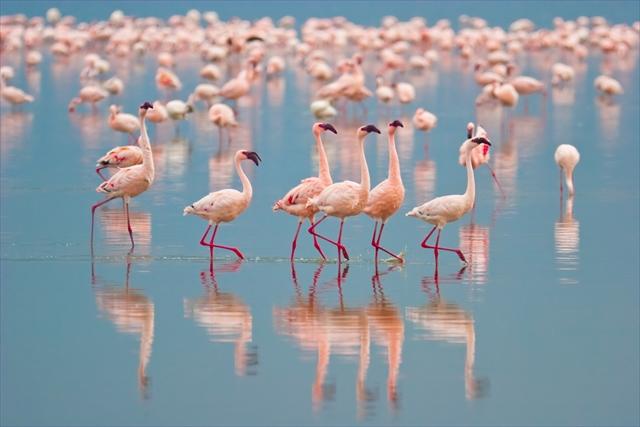 フラミンゴをピンク色に染める、世界の絶景湖3選