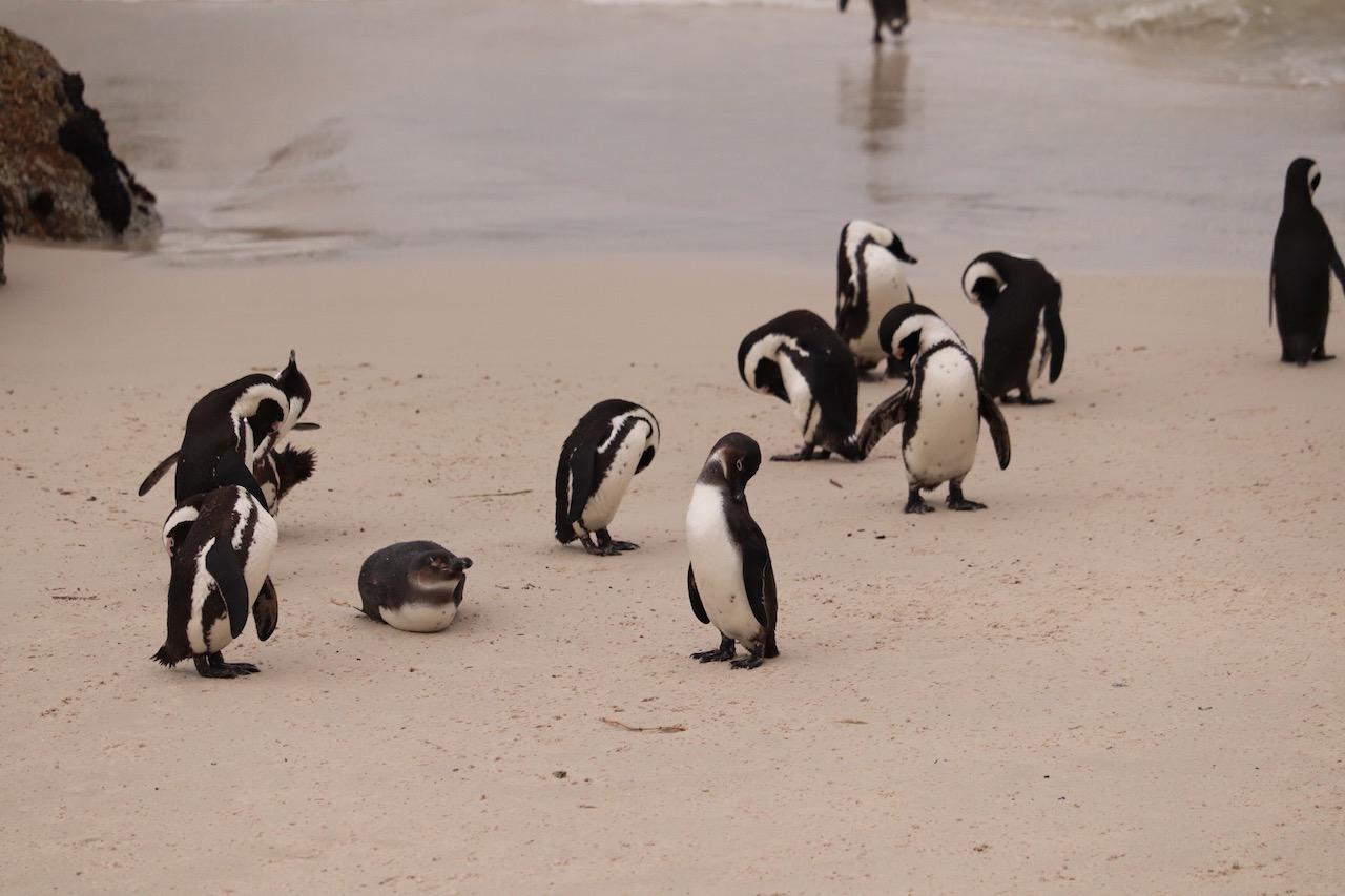 帰ってきたペンギン