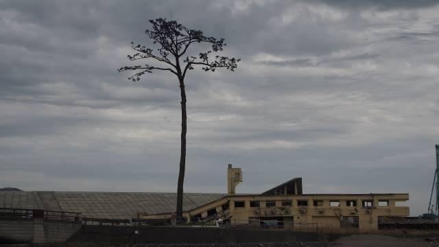 一本松と建物