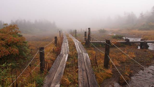 湿原に木道
