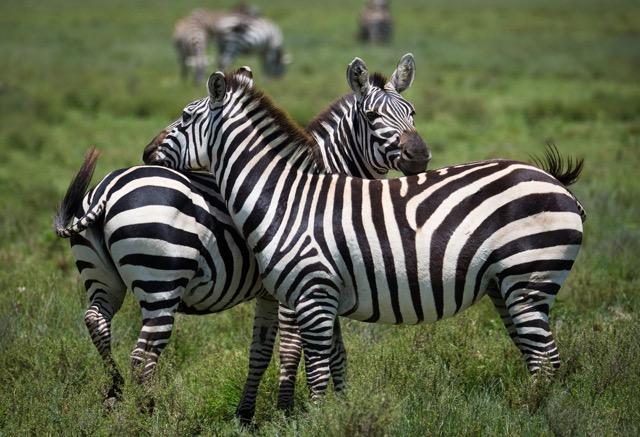肉食女子のメッカ、ケニアにある野生動物の肉専門店って?