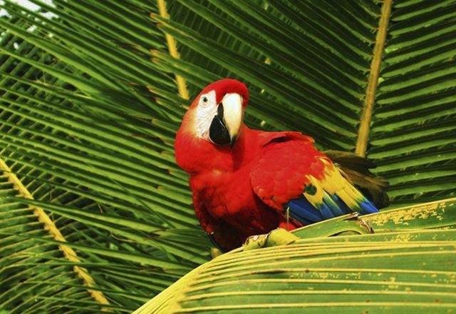 costarica160215-01
