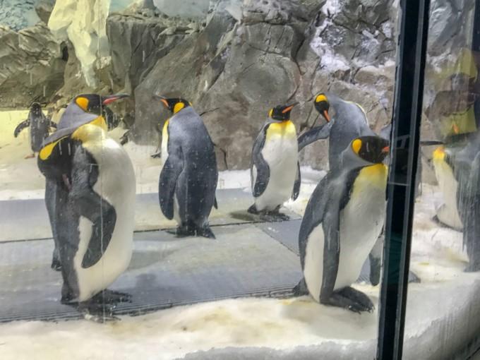 ゴールドコーストにあるシーワールドのペンギン