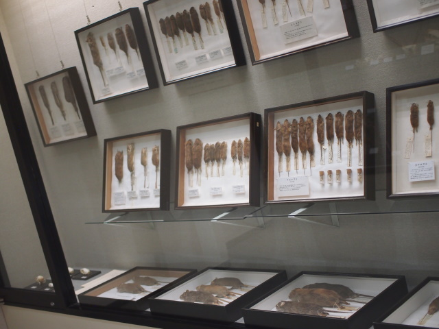 庄原市立比和自然科学博物館