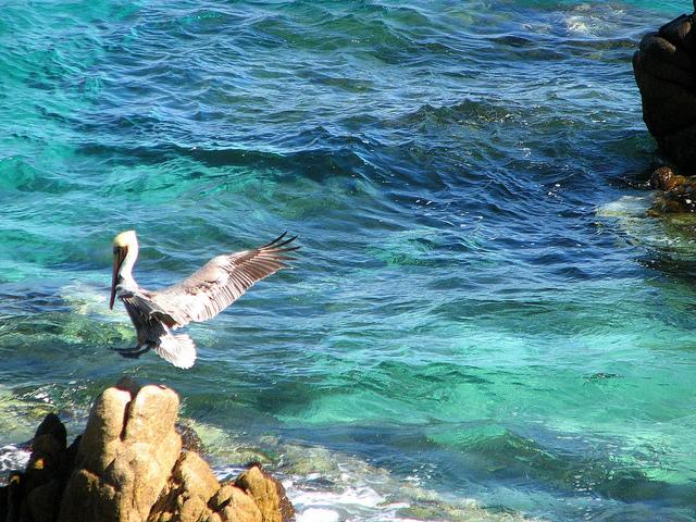 カリフォルニア湾の島々と保護地域群